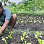 Growing sustainable livelihoods in West Timor